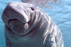 Crystal River Vacation Property, Manatees, Vacation Home, Homosassa Vacation Home, Ozello Rental, Citrus County Renta
