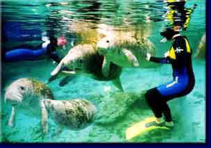 Crystal River Vacation Property, Swim with manatees, Vacation Home, Homosassa Vacation Home, Ozello Rental, Citrus County Renta